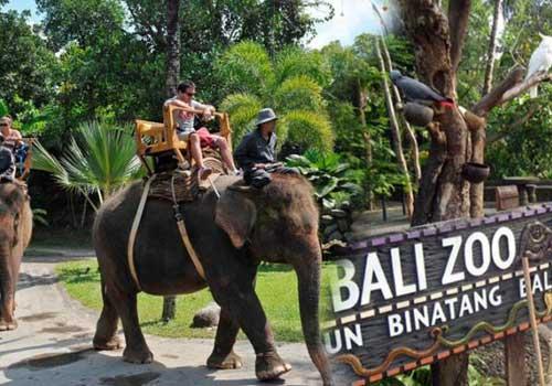 Balizoo